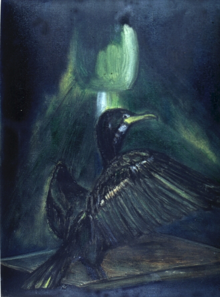 green light cormorant