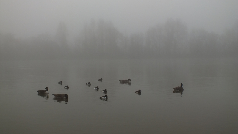 misty-morn